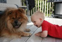 great-nephew visits with Butters (chow)